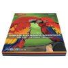 Daco - Hârtie colorată asortată