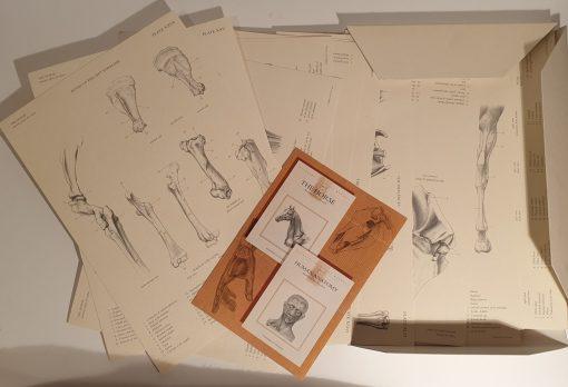 Lucas Art - Manual de anatomie a calului, Manuale tehnice Leonardo